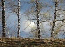 Springtime came. Warm springtime came to ample steppe Altaya Stock Photography