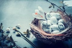 Springtime card with close up of nest with eggs and spring flowers and branches. Royalty Free Stock Images