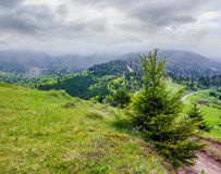 Springtime in Carpathian mountains. Beautiful scenery on a rainy day with overcast sky. country road runs uphill through grassy hill in to the distance Stock Image