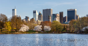 Springtime in Central Park, New York City. Central Park and the Lake in the spring featuring the Yoshino Cherry trees (cerasus x yedoensis) and an eastern view Stock Images