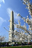 Springtime cherry-blossom trees against the backdrop of Washington Monument Stock Photos