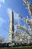 Springtime cherry-blossom trees against the backdrop of Washington Monument Stock Photos