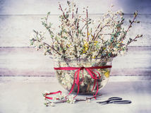Springtime cherry blossom twigs bunch in vase with ribbon and shear on rustic table at wooden wall Royalty Free Stock Images