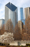 Springtime in the city. Spring in Chicago with (Smurfit-Stone) buildings in the background Royalty Free Stock Photography