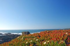Free Springtime Coastal Meadow Stock Photography - 561872