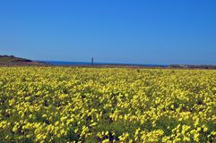 Free Springtime Coastal Meadow Royalty Free Stock Images - 564959