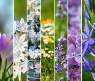 Springtime collage Stock Photos