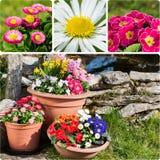 Springtime collage Royalty Free Stock Photo