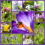 Springtime collage Royalty Free Stock Image