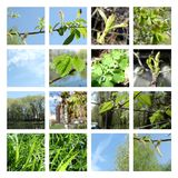 Springtime leaves and buds collage. Set of 16 pictures about spring - collage of images about nature, plants in April, the leaves and buds, catkins, sky and royalty free illustration
