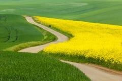 Springtime. Colorful springtime in Czech Republic Stock Photography