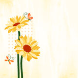 Springtime Colorful Daisy Flower with Butterfly. On Grungy Background Stock Photos