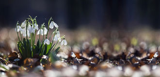 Springtime concept banner Royalty Free Stock Image