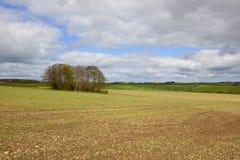 Springtime copse Stock Images