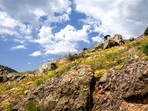 Springtime in Crimea. Stock Photos