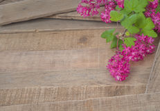 Springtime Currant Blossoms on Rustic Wood Board background Stock Photos