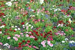 Springtime daisy flowers Stock Photo