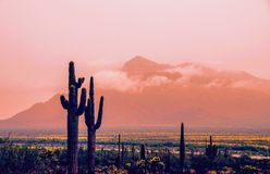 Panoramic view of rainy day in desert, springtime, Tucson Arizona. It is springtime in the desert; the landscape vividly colored by vast tracts of blooming Stock Photos