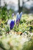Springtime Dew Royalty Free Stock Photos