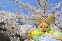 Springtime easter bunny and colorful eggs Stock Image