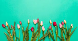 Free Springtime, Easter. Pink And Red Tulips On Green Background, Top View, Copy Space Royalty Free Stock Photo - 137857845