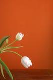 Springtime Elegance Stock Image