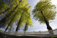Springtime fence and trees Stock Images