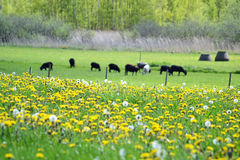 Springtime field. Flower field in the spring on the countryside Stock Photo