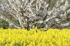 Springtime fields Stock Photo