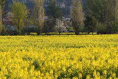 Springtime fields Stock Photography