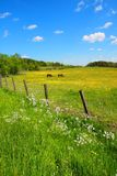 Springtime fields with horses Stock Photo