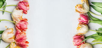 Springtime floral border mit colorful tulips, floral banner, top view. Spring flowers royalty free stock photo
