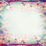 Springtime floral frame with pretty cherry or sakura blossom, at bokeh Royalty Free Stock Images
