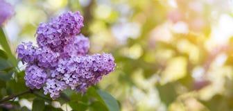 Springtime flower banner Royalty Free Stock Photo