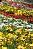 Springtime flower blooms Royalty Free Stock Image