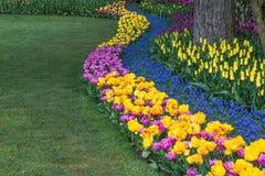 Springtime Flower Border Stock Images