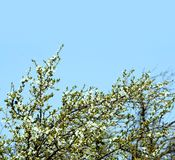 Springtime flowers. Beautiful springtime sky in the middle of a day Stock Photos