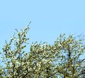 Springtime flowers stock photos