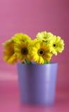Springtime Flowers Royalty Free Stock Photos