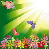 Springtime flowers & butterflies on green light. Background Royalty Free Stock Images