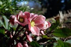 Springtime flowers Stock Image