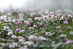 Springtime flowers Stock Photo