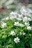 Springtime flowers Royalty Free Stock Photo