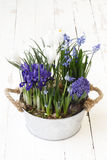 Springtime, flowers composition in pot on wooden white. Blank background stock photo