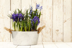 Springtime, flowers composition in pots on wooden white Royalty Free Stock Photography