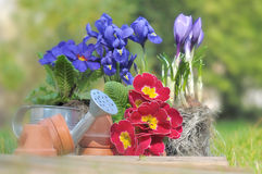 Springtime flowers in garden Stock Photos