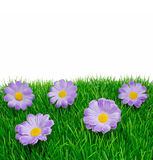 Springtime flowers on grass Royalty Free Stock Photography