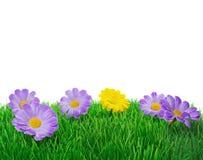 Springtime flowers on grass stock image