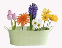 Springtime flowers in green container. Springtime flowers in green conainer including tulips, daisies, and hyacinth Royalty Free Stock Photo
