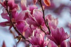 Springtime flowers stock photography